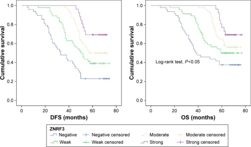 Distribution of Kaplan–Meier survival functions of OS and DFS in patients with different ZNRF3 expressions.Abbreviations: DFS, disease-free survival; OS, overall survival.