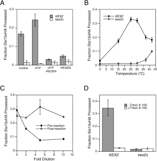 Characterization of in vitro TGN membrane fusion. (A) Processing of Ste13αHA requires an ATP regeneration system. Control reactions (±Kex2p) included 1.5 mM exogenous Mg-ATP, 40 mM phosphocreatine, and 0.125 mg ml−1 creatine kinase. Omission of Mg-ATP (−ATP), or phosphocreatine/creatine kinase, (−Regen) is indicated. (B) Temperature dependence of Ste13αHA processing in vitro. Reactions were performed at each temperature using lysates from either KEX2 or kex2Δ strains. (C) Dilution sensitivity of Ste13αHA processing. Reactions were diluted to the indicated extents before (Pre-reaction) or after (Post-reaction) incubation under reaction conditions. (D) Detergent sensitivity. MSS membranes from either KEX2 or kex2Δ strains were combined with MSS membranes from a Ste13αHA-expressing strain, and reactions were performed in the presence or absence of 1% Triton X-100.