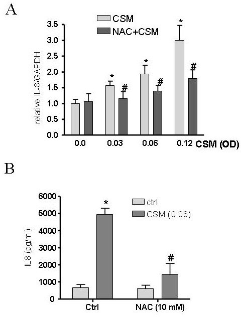 IL-8 expression is ROS dependent after CSM exposure. MDMs (5 × 106 cells/ml) were pretreated with NAC (10 mM) for 30 min and then stimulated by CSM (0.03, 0.06 and 0.12 OD) for 4 h. RNA was extracted and mRNA levels of IL-8 were quantified by real-time PCR (A). Results are expressed as copies of IL-8 vs. copies of GAPDH mRNA. (B) MDMs (1 × 106 cells/ml) were pretreated with NAC (10 mM) for 30 min and then stimulated by CSM (0.06 OD) for 16 h Supernatants were collected after 16 h incubation and IL-8 production was quantified using ELISA methods. *P < 0.05 vs baseline # P < 0.05 vs CSM stimulated (n = 3).