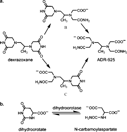 a. A reaction scheme for the hydrolysis of dexrazoxane to metabolites B and C and its strong metal ion-chelating form ADR-925; b. DHOase-catalyzed reversible conversion of L-dihydroorotate into N-carbamoyl-L-aspartate (carbamyl aspartate).