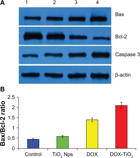 Expression of Bax, Bcl 2, and caspase 3 protein A and   Open i