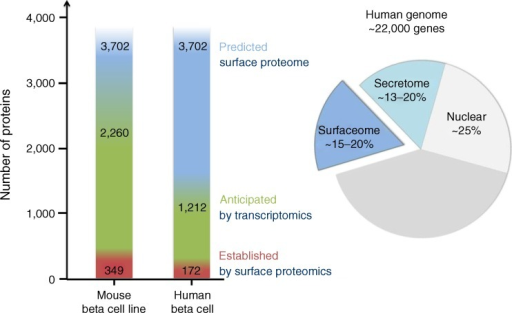 Chart of cell surface proteins predicted to be expressed in human beta cells. At 15–20 %, the predicted human surface membrane proteome constitutes a large part of the whole proteome [7, 8, 100]. Predicted cell surface proteins (blue) [7], anticipated cell surface proteins as determined by mRNA expression in human beta cells by the Beta Cell Gene Atlas (green) [9] and high-confidence human beta cell surface proteins as determined by N-linked glycoprotein cell surface proteomics (red) [10]. Note that for a large proportion of the predicted cell surface proteins no gene expression data are available. The secretome and sheddome were not considered in this graph because of a lack of comprehensive proteomic data