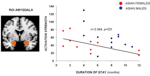 Correlation analysis between mean parameter estimates of the amygdala region and duration of stay in Europe (months) showing a significant negative association (r(22) = −0.394, p = .031) indicating stronger amygdala response in those Asian participants with shorter duration of stay and thus probably reflecting adaptation effects on the neural level.