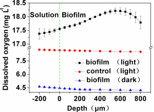 Profiles of dissolved oxygen within the A8 biofilm.