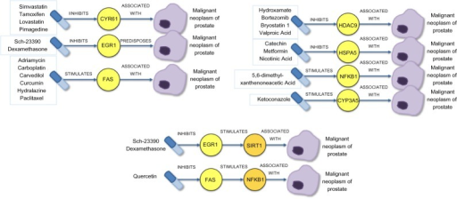 The resulting drug candidates and their mechanism of action in treating prostate cancer are represented schematically.