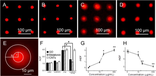 "Genotoxicity of cells treated with GO and X-ray irradiation with halo assay. Fluorescent images of arrayed cells (A); cells treated with 10 μg/mL GO (B); cells exposed to 1.25 Gy X-ray (C); and cells treated with GO and then exposed to 1.25 Gy X-ray (D); an enlarged image shows that halo and nucleus (E); the NDF values of cells after different treatment (F); the rNDF values of cells treated with different concentration of GO without (G) and with 1.25 Gy X-ray radiations (H). ""*"" (p < 0.05) and ""**"" (p < 0.01) represent significant difference and extra significant difference, respectively."