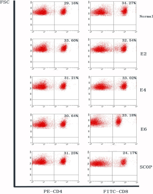 Flow cytometry analysis of cervical lymph nodes.Flow cytometry analysis of freshly isolated cells from cervical lymph nodes stained with CD4-PEand CD8-FITC conjugated antibody in each group. Numbers in the quadrants indicate the percentage of cells. Similar percentages of CD4+lymphocytes were observed in the cervical lymph nodes in all groups. Percentages of CD8+lymphocytes in ICES 2-week, 4-week and 6-week groups were also at baseline level, while that in the SCOP group was lower than the normal level.