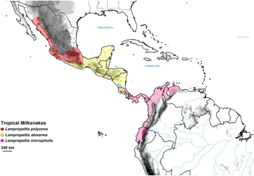 Map showing sampling, and estimated full ranges of three tropical milksnakes, Lampropeltis polyzona (red), L. abnorma (yellow), and L. micropholis (pink).Ranges of all species are based on Ruane et al. [62].