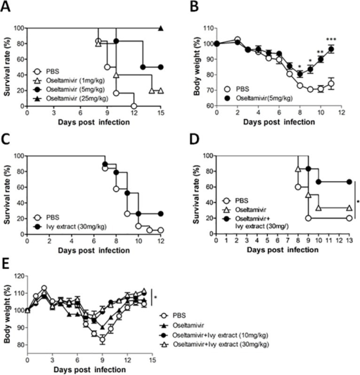 Determination of the effective dose of ivy extract in combination with oseltamivir.The survival rate (A) and body weight (B) of PR8-infected mice administered oseltamivir (*P<0.05; **P<0.01; ***P<0.001, two-tailed unpaired t-test). C: Survival rate of PR8-infected mice that received ivy extract or vehicle (PBS). D: Survival rate of PR8-infected mice that received oral coadministration of ivy extract and oseltamivir (*P<0.05, log-rank analysis of Mantel-Cox data) E: Body weight of PR8-infected mice that received oral coadministration of ivy extract and oseltamivir (*P<0.05, one-way ANOVA with Tukey's post hoc test).