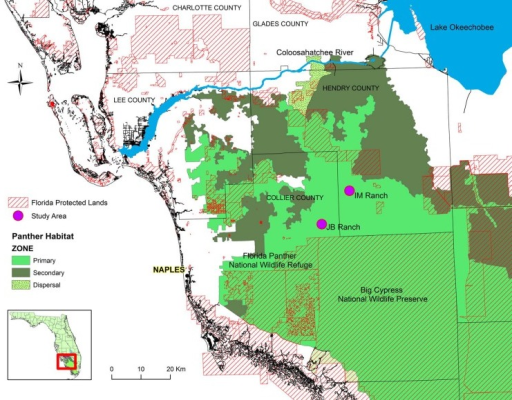 Location of the JB Ranch (JB) and Immokalee Ranch (IM) study areas in the Primary Zone (high quality panther habitat) in southwest Florida.
