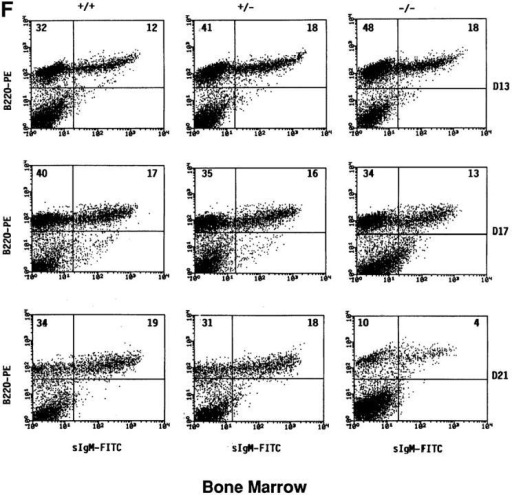 Total cellularity and percentages of B cell populations in the  LNs, spleen, and BM of TC-PTP–deficient mice. Total cellularity on different days after birth from the (A) LNs, (B) spleen, and (C) BM. Data are  presented as the mean of 3–6 mice/group. Pre-B (B220+sIgM−) and mature B cell (B220+sIgM+) populations were determined by two-color  flow cytometry. Each column and row of FACS® profiles represents the  different groups (+/+, +/−, −/−) and different days after birth (D7,  D13, and D21), respectively. Numbers in the upper quadrants of each  FACS® profile represent the percentage of the population from the (D)  LNs, (E) spleen, and (F) BM.