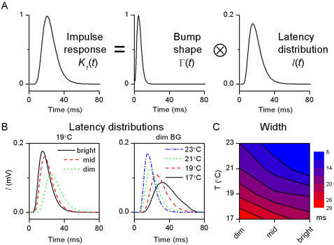 Bump latency distributions.A, Latency distribution is calculated by deconvolving the bump shape from the corresponding impulse response (see Materials and Methods) at each experimental condition. B, Estimated latency distributions are shown for the same conditions as in Figure 6. As their time-to-peak decreases with brightening or warming, bumps appear sooner. C, The bumps are also more precise (synchronized), as it can be seen in the decrease of the width of the (normalized) latency distributions.