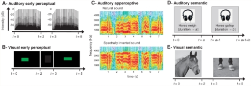 Schematic of experimental stimuli and presentation sequences (A and B). Schematics of auditory and visual early perceptual stimuli, and the presentation sequence used. (C) Schematic of spectral inversion of a complex sound, as used in the auditory apperceptive test. (D and E) Examples of auditory and visual semantic stimulus pairs, and a schematic of the presentation sequence used. t = time (s).