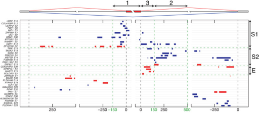 The RNA splicing map of TDP-43The map of crosslink clusters at positions within 500 nt of alternative exons and flanking exons. The cassette exons with ΔIrank > 1 (enhanced exons, red clusters) or ΔIrank < −1 (silenced exons, blue clusters) with at least one crosslink cluster in these regions are shown. The exons are grouped by sequential analysis of crosslink cluster positions in three regions: group S1 is identified by clusters in region 1, 150nt upstream till the exon and within the exon; group S2 by clusters in region 2, 150–500nt downstream of the exon; and group E by clusters present 0–150nt downstream of the exon.