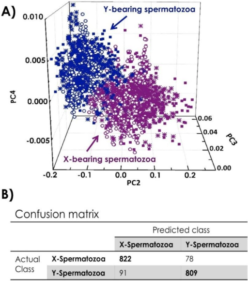 (A) 3D Principal Component Analysis (PCA) score plot comparing 900 X- and 900 Y-spermatozoa from 3 bulls; (B) Confusion matrix giving the classification for X-and Y-spermatozoa.