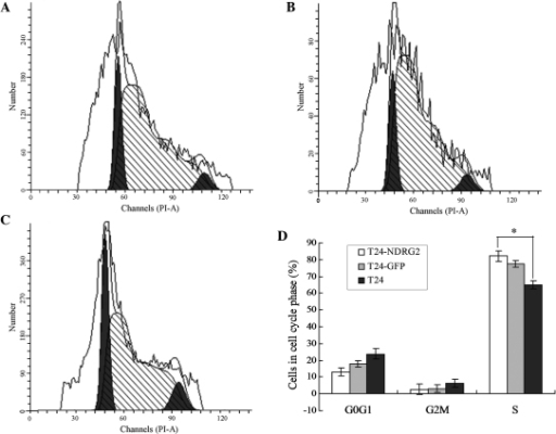 NDRG2 induces cell cycle arrest in T24 cells. Flow cytometry was used for cell cycle analysis in (A) T24-NDRG2, (B) T24-GFP and (C) T24 cells. (D) Quantification of the proportion of cells in G0/G1, G2M and S phase of the cell cycle. Values are presented as the mean ± standard deviation. *P<0.01 vs. T24 cells. NDRG2, N-Myc dowstream-regulated gene 2; T24-GFP, control green fluorescent protein adenovirus-infected T24 cells; T24-NDRG2, GFP-NDRG2 adenovirus-infected T24 cells; PI-A, propidium iodide-A.