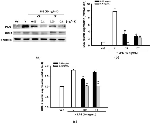 Effects of ethanol extracts of C. rutidosperma and E. thymifolia on iNOS and COX-2 expression in LPS-induced BV2 cells. (a) BV2 cells were cultured with indicated reagent in 6-well plates for 16 h and Western blotting of iNOS, COX-2 and α-tubulin were performed, as described in Materials and Methods. Representative blots from three independent experiments are shown; (b,c) Band intensities were quantified by ImageJ software and indicated as relative folds of iNOS/α-tubulin and COX-2/α-tubulin. Data are represented as the mean ± SD (n = 3). Statistical differences are presented ** p < 0.01 compared with the vehicle control (without LPS) and ## p < 0.01 compared with the LPS-treated vehicle.