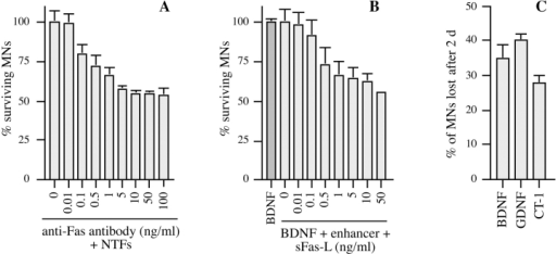 Activation of Fas triggers PCD of motoneurons even in the presence of optimal trophic support. Different agents known to activate Fas receptor by clustering were tested for their ability to trigger motoneuron cell death. (A) Purified E12.5 mouse motoneurons were cultured in the presence of BDNF (1 ng/ml), CT-1 (10 ng/ml), and GDNF (0.1 ng/ml) (+NTFs) for 1 d. Subsequently, the indicated concentrations of anti-Fas antibody were added in the continued presence of NTFs, and motoneuron survival was counted 2 d later, at 3 DIV. Counts were expressed relative to the value for NTFs at 3 DIV. Fas antibody induced a dose-dependent loss of 45% of the motoneurons. (B) An analogous experiment using purified motoneurons from E14 rat, cultured in the continued presence of BDNF (1 ng/ml). After 1 DIV, tagged soluble FasL was added at the indicated concentrations in the presence of 1 μg/ml of enhancer antibody, which had no effect when tested alone. Survival was counted 2 d later. (C) Comparison of the fractions of E14 rat motoneurons lost after 2 d of incubation with 10 ng/ml sFasL, in the presence of indicated neurotrophic factors used at the same concentrations as for mouse motoneurons in A. The number of motoneurons lost was expressed as a percentage of the total number of motoneurons present in the same conditions but without sFasL. All histograms are representative of at least three independent experiments. Error bars represent the mean ± range of duplicate wells.