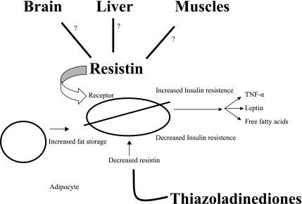 Resistin and its areas of linkage [23]