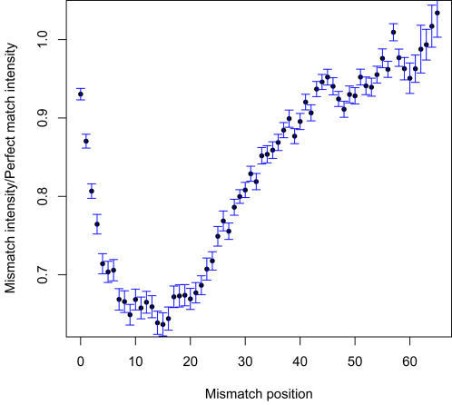 Effect of the position of mismatches on the hybridization of target and probe.The mean mismatch (MM) probe intensity vs perfect match (PM) probe intensity ratio, averaged over 60 PM probes and their corresponding MM probes, from 10 arrays is plotted vs the position of the MM.