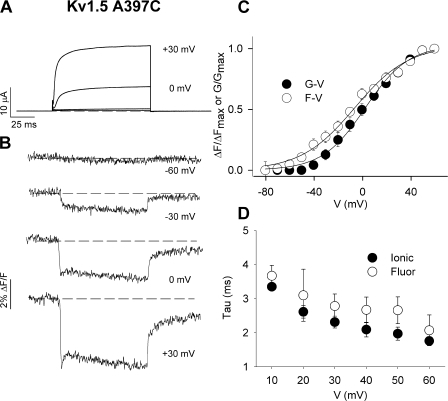Other fluorophores report the unusual fluorescence signal. (A and B) Ionic current (A) and fluorescence (B) traces recorded from oocytes expressing Kv1.5 A397C channels labeled with PyMPO. Voltage clamp pulses were applied from −80 to +60 mV in 10-mV increments (100 ms duration) from a holding potential of −80 mV (only traces at −60, −30, 0, and +30 mV are shown). (C) Mean G-V and F-V relations for Kv1.5 A397C labeled with PyMPO (n = 4). Boltzmann fits of the data gave V1/2 and k values for G-V and F-V relations of 2.3 ± 1.9 and 17.8 ± 1.3 mV (G-V), respectively, and −6.5 ± 2.5 and 22.2 ± 1.7 mV (F-V), respectively. (D) Mean values for the time constants of the dequenching component of fluorescence measured from PyMPO attached to A397C and the time constants of the associated ionic current activation. The time constants show similar voltage dependence at test voltages ranging from +10 to +60 mV.