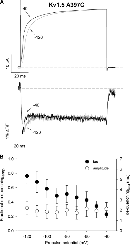 The dequenching of fluorescence is associated with late transitions in the activation pathway. (A) Ionic currents and fluorescence signals recorded from TMRM attached at A397C during a 100-ms test pulse to +60 mV following a 100-ms conditioning pulse to either −120 or −40 mV. The dequenching component of fluorescence remains robust in channels that activate from preactivated states, suggesting that the dequenching component does not reflect voltage sensor transitions early in the activation pathway. (B) Mean values for the time constant and relative amplitude of the dequenching component of fluorescence during a test pulse to +60 mV from a range of prepulse potentials (n = 3).