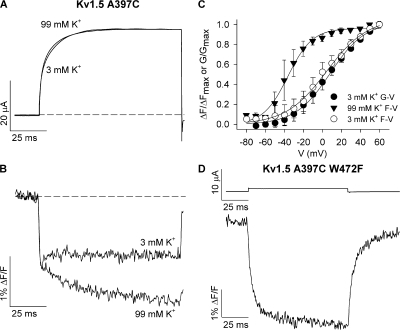 Immobilization of the selectivity filter gate abolishes the fluorescence dequenching. (A and B) Ionic current and fluorescence signals recorded from Kv1.5 A397C channels during 100-ms pulses to +60 mV in the presence of 3 and 99 mM external K+. (C) Mean F-V relation with 99 mM K+ plotted alongside the G-V and F-V relations obtained with 3 mM K+ to demonstrate the voltage dependence of voltage sensor movement when the selectivity filter gate is immobilized by high external K+. The G-V relation with 99 mM K+ is not shown because of the large error associated with calculations around the reversal potential (∼0 mV). V1/2 and k values for the F-V relation with 99 mM K+ were −36.4 ± 1.2 and 12.8 ± 1.0 mV, respectively (n = 3). V1/2 and k values for the G-V and F-V relations with 3 mM K+ were 8.1 ± 2.5 and 18.3 ± 1.7 mV (G-V) and 4.3 ± 2.0 and 21.5 ± 1.3 mV (F-V), respectively (n = 3). The F-V relation with high external K+ was therefore 40 mV left shifted from the G-V relation. (D) Ionic current and fluorescence signals from Kv1.5 A397C W472F mutant channels (W472F is equivalent to the W434F mutation in Shaker channels) during a 100-ms voltage clamp pulse from −80 to +60 mV. Note that only small leak currents were observed from oocytes injected with Kv1.5 A397C W472F. Similar recordings were obtained from nine (W472F) other cells.
