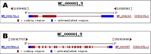 Genomic structures. (A) Nppa gene; (B) Npr1 gene (provided in the public domain by the National Center for Biotechnology Information, Bethesda, MD, U. S. A.; available at http://www.ncbi.nlm.nih.gov).