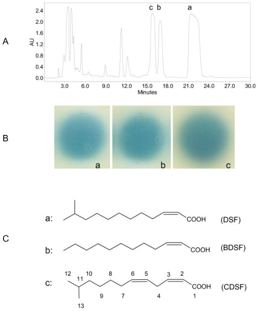 Xoo produces multiple DSF-family signals. (A) HPLC analysis of the active fractions after flash column chromatography. (B) The compounds in fractions a, b, and c showed strong DSF-like activity. (C) Chemical structures of the compounds in fractions a, b, and c as confirmed by ESI-MS and NMR analysis.