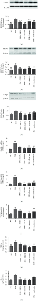 Effects of Xiexin decoction on renal inflammation factor and transforming growth factor β1 (TGF-β1) expression in diabetic rats. (a)–(c) Western blot analysis of protein levels; (d)–(f) Real-time PCR analysis of mRNA levels; (g)–(h) Quantification by ELISA. NC: normal control; DM: diabetic model control; XXDL: XXD extract 1.25 g/kg; XXDH: XXD extract 2.5 g/kg; losartan 10 mg/kg and metformin 100 mg/kg. NC and DM were treated with normal saline. All the rats were administered via intragastric gavage once time each day for 12 weeks. ICAM-1: intercellular adhesion molecule-1; MCP-1: monocyte chemotactic protein-1; TNF-α: tumor necrosis factor-α; IL-6: interleukin-6. Data are expressed as mean ± SD *P < 0.05, **P < 0.01 as compared with DM.