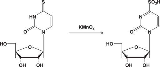 Permanganate oxidation of 4-thiouridine to form its sulfonate derivative.
