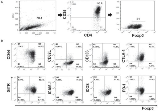 Immunophenotypes of ex-vivo expanded retinal-induced Tregs.(A) Retinal-induced CD4+CD25+ Tregs showed >96% purity on flow cytometry. (B) Tregs generated were characterized by positive expression of intracellular Foxp3, CTLA-4, and surface expression of the indicated markers (PD-1, GITR, ICAM-1, CD44, ICOS) in the gated T-cell populations. Also, they showed weak positive surface staining for CD62L and CD103. The percentages indicate numbers of double-positive cells.