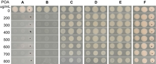 Effect of β-alanine concentration on POA susceptibility. M. tuberculosis H37Ra on 7H11 agar with no β-alanine (A), 0.1 µM β-alanine (B), 1 µM β-alanine (C), 5 µM β-alanine (D), 10 µM β-alanine (E), and 100 µM β-alanine (F).