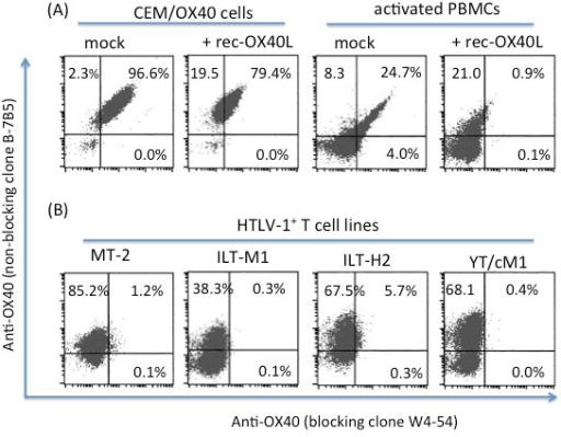 Blocking (clone W4-54) versus non-blocking (clone B-7B5) mAb against 2 distinct epitopes of OX40 distinguish between OX40L bound and unbound OX40. (A) OX40-expressing CEM and activated PBMCs were stained with the two mAbs in the absence (mock) or presence of 1 μg/ml of recombinant OX40L (rec-OX40L). (B) Various HTLV-1+ T cell lines were stained with B-7B5 andW4-54 labeled with FITC and Cy5, respectively. Data shown are representative of 3 independent experiments.