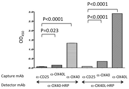 Presence of OX40-OX40L complexes in HTLV-1+T cell lysates. The ILT-H2 cell line derived from an ATL patient were lysed and the lysates incubated in microtiter wells that had been previously coated with either anti-CD25, OX40 or OX40L mAb for 1 hour. Anti-CD25 mAb was used as a non-specific negative control. After washing, the levels of OX40 or OX40L bound to the plates were assayed using either HRP-labeled anti-OX40 or anti-OX40L mAb. Data shown are representative of 3 independent experiments.