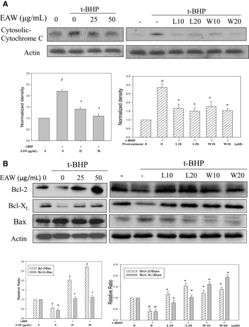 Effects of EAW, luteolin and wedelolactone on t-BHP-induced cytochrome C release and changes in Bcl-2 family proteins. PC12 cells were pretreated with EAW (25 and 50 μg/mL) or luteolin (L10, 10 μM; L20, 20 μM) or wedelolactone (W10, 10 μM; W20, 20 μM) for 24 h, then 100 μM of t-BHP was added for 3 h. (A) Cells were harvested after incubation, and the cytosolic protein extracts were prepared as described in the text and subjected to Western immunoblotting analysis against anti- cytochrome C. The average densitometric value of cytochrome C is shown as the mean ± SD (n = 3). # P < 0.05, compared to the solvent control (0.1% DMSO). *P < 0.05, compared to t-BHP treatment alone. (B) After treatment, the total cell lysates were prepared and subjected to Western immunoblotting analysis against against anti-Bcl-2, -Bcl-xL, -Bax and anti-actin. Actin was used as the loading control. The ratio of Bcl-2/Bax and Bcl-xL/Bax are shown as the mean ± SD (n = 3). # P < 0.05, compared to the solvent control (0.1% DMSO). *P < 0.05, compared to t-BHP treatment alone.