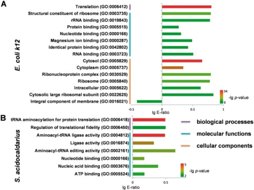 Statistical analyses of GO annotation for phosphoproteins in E. Coli k12 and S. acidocaldarius. (A) The enriched GO terms for phosphoproteins in E. Coli k12. (B) The enriched GO terms for phosphoproteins in S. acidocaldarius.