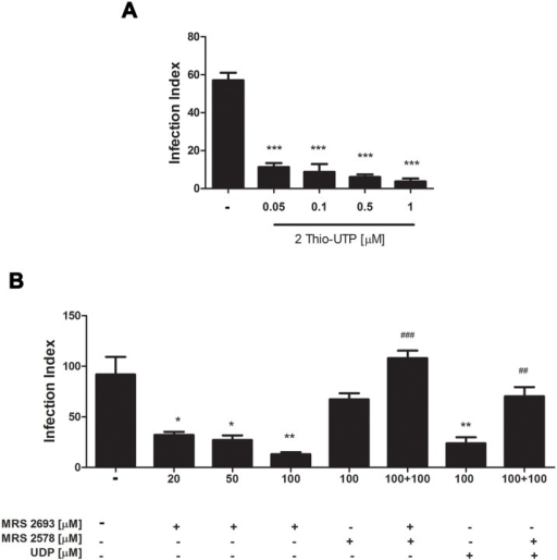 The activation of different P2Y receptor subtypes reduce T. gondii infection in peritoneal macrophages.Mouse peritoneal macrophages were infected with T. gondii tachyzoites at a ratio of 5:1 for 2 h and then treated with specific P2Y receptor agonists and antagonists for 30 min, prior to infection index determination. (A) Treatment 2 Thio-UTP at concentrations of 0.05 or 0.1 μM (to activate P2Y4) and 0.5 or 1 μM of 2 Thio-UTP (to activate P2Y2) led to similar reductions in the infection index relative to untreated controls. (B) The infection index was also reduced after treatment with MRS 2693, a specific P2Y6 agonist, and MRS 2693 effect was totally blocked by pre-treatment with the specific P2Y6 antagonist MRS 2578. The 20, 50, 100 represent on the x-axis concentration of the agonist/antagonist. * statistically significant relative to untreated. # statistically significant relative to reduction of infection index. Data represent mean and SEM of three independent experiments. * p < 0,05; **,## p < 0.001; ***, ### p < 0.0001.