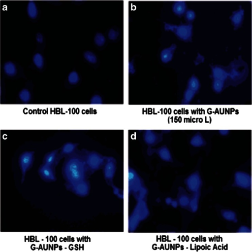 Fluroscent microscopic pictures of HBL-100 cells a untreated and treated b with 500 μM GAuNPs, c GSH-GAuNPs, and d liopic acid-GAuNPs