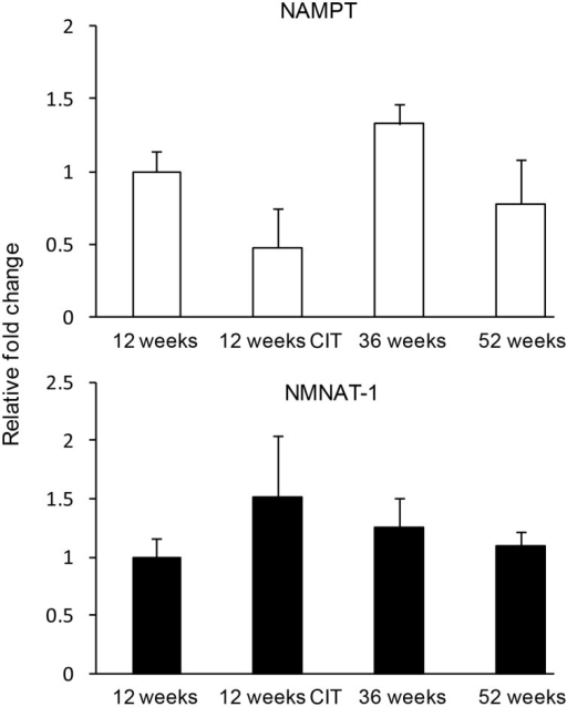 Nicotinamide adenine dinucleotide (NAD) biosynthethic enzymes were not affected by chronic citalopram (CIT) treatment or aging. CIT was administered at 10 mg/kg/bodyweight daily in male mice for 4 weeks duration. Data are expressed as mean ± SEM. Statistical analysis was carried out using one way analysis of variance (12 weeks control, n = 9; 12 weeks CIT, n = 9) aging animals used were 36 weeks (n = 8) and 52 weeks (n = 10).