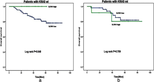 Among patients with KRAS wild-type tumors, those with high SLFN11 expression had significantly longer survival than patients with low SLFN11-expressing ones (Log rank P = 0.048) (a). However, among patients with mutated KRAS tumors, those with high SLFN11 expression had almost the same survival as patients with low SLFN11-expressing ones(Log rank P = 0.709) (b)