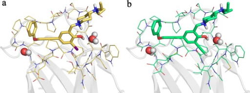 Optimized binding sites of PK5176 (2) andPK5211 (3). (a) Binding site of 2 with twostructuralwaters comprising 343 atoms. (b) Binding site of 3 withtwo structural waters comprising 345 atoms.
