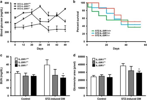 An IL-20R1 deficiency reduced the severity of STZ-induced diabetic nephropathy. (a) Blood glucose measurements in IL-20R1+/+, IL-20R1+/− and IL-20R1−/− mice from day 5 to 49 after STZ treatment (n=8 per group). *P<0.05 compared with IL-20R1+/+ mice. The data are expressed as the mean±s.e.m. of three independent experiments. (b) Survival in each group (n=8 per group) was monitored daily until the end of the experiment. The data are representative of three independent experiments. (c, d) Serum BUN levels and renal glomerular areas on day 49 were analyzed in IL-20R1+/+, IL-20R1+/−, and IL-20R1−/− mice after STZ or control buffer treatment (n=8 per group). *P<0.05 compared with IL-20R1+/+ mice. The data are expressed as the mean±s.e.m. of three independent experiments.