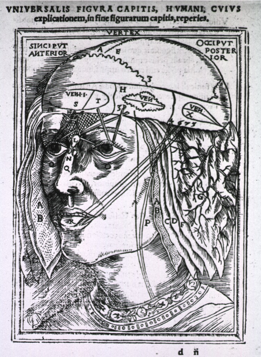 <p>Human head with exposed skull cap, layers of skin and flesh hanging at the sides; lines connect the mouth and eyes to regions of the skull.</p>