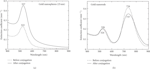 Extinction spectra before and after incubation ofHER81 with (a) gold nanospheres, (b) gold nanorods. In both cases, a red shiftin plasmon band(s) occurs after incubation with the antibody signifyingsuccessful bioconjugation.