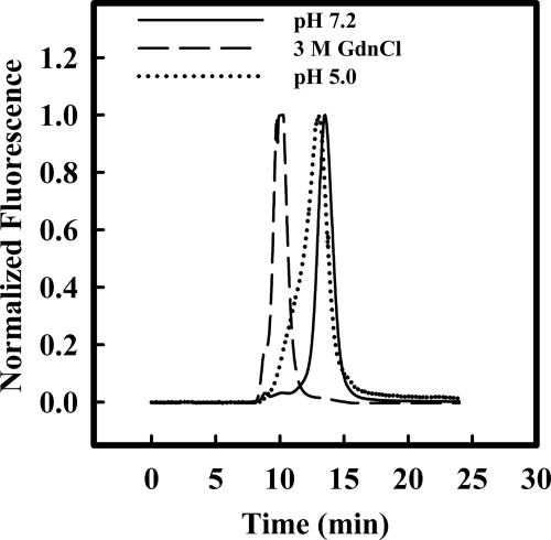 Size-exclusion HPLC analysis of oligomeric states of native and MG p53C. Normalized fluorescence at 280 nm was detected during gel filtration chromatography of wt p53C at pH 7.2 (solid line), pH 5.0 (dotted line), or incubated with 3 m GdmCl (dashed line).