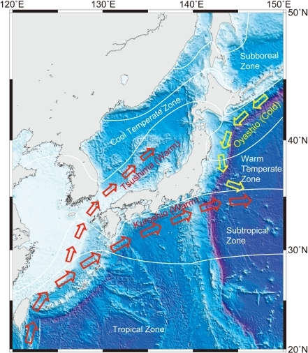 Schematic diagram of surface currents and climate regimes around Japan.Red and yellow arrows indicate warm (Kuroshio and Tsushima) and cold (Oyashio) currents, respectively.