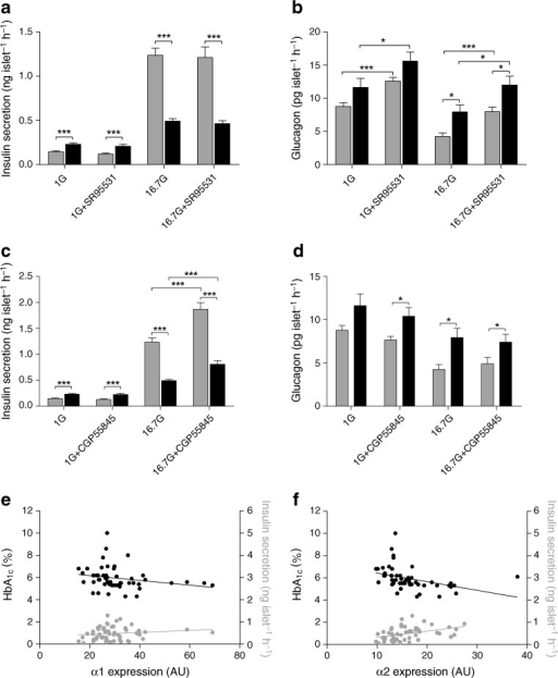 GABAA channel and GABAB receptor antagonists increase hormone release in pancreatic islets from normoglycaemic and type 2 diabetic individuals. a Insulin release was increased in 1 mmol/l glucose (1G) but decreased in 16.7 mmol/l glucose (16.7G) in islets from type 2 diabetic individuals (black bar) compared with those from normoglycaemic individuals (grey bar). SR95531, a GABAA channel antagonist, at a concentration of 10 μmol/l did not modulate insulin release. b Glucagon release was increased in 16.7 but not 1 mmol/l glucose in islets from type 2 diabetic individuals compared with those from normoglycaemic donors. SR95531 (10 μmol/l) increased glucagon release at both glucose concentrations in islets from type 2 diabetic and normoglycaemic individuals. c Insulin release was increased by the GABAB antagonist, CGP55845 (10 μmol/l) in 16.7 but not 1 mmol/l glucose in islets from type 2 diabetic and normoglycaemic individuals. d Glucagon release was not affected by CGP55845 (10 μmol/l). Grey bars: n = 19–31 from four to six normoglycaemic individuals. Black bars: n = 19 from three type 2 diabetic donors. Data are presented as mean ± SEM; *p < 0.05, ***p < 0.001. e Correlation of the α1 GABAA subunit gene expression with insulin secretion measured at 16.7 mmol/l glucose and HbA1c level. A negative correlation with HbA1c (black circles; n = 51; R = 0.3724; p = 0.0071) and no correlation with insulin (grey circles; n = 53; R = 0.1655; p = 0.2363) were observed. Correlation analysis was performed using non-parametric Spearman's test. f Correlation of the α2 GABAA subunit gene expression with insulin secretion measured at 16.7 mmol/l glucose and HbA1c level. A negative correlation with HbA1c (black circles; n = 51; R = 0.6453; p < 0.0001) and positive correlation with insulin (grey circles; n = 53; R = 0.4790; p = 0.0003) were observed. Correlation analysis was performed using non-parametric Spearman's test. NB To convert values for HbA1c in % into mmol/mol, subtract 2.15 and multiply by 10.929
