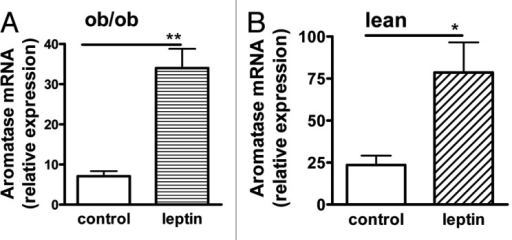 Figure 4. Induction of aromatase expression by leptin. Aromatase mRNA expression in para-uterine fat pads from ob/ob (A) and wild-type C57BL/6 mice (B) 3 h after ip injection with saline (control), or leptin (10 μg; R&D Systems). (A and B) n = 6, mean ± SD; *P < 0.05 **P < 0.01. Gene expression was measured using real-time quantitative PCR.