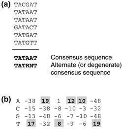 Representation of transcription-factor binding sites. (a) An example of six sequences and the consensus sequence that can be derived from them. The consensus simply gives the nucleotide that is found most often in each position; the alternate (or degenerate) consensus sequence gives the possible nucleotides in each position; R represents A or G; N represents any nucleotide. (b) A position weight matrix for the -10 region of E. coli promoters, as an example of a well-studied regulatory element. The boxed elements correspond to the consensus sequence (TATAAT). The score for each nucleotide at each position is derived from the observed frequency of that nucleotide at the corresponding position in the input set of promoters. The score for any particular site is the sum of the individual matrix values for that site's sequence; for example, the score for TATAAT is 85. Note that the matrix values in (b) do not come from the example shown in (a) but rather are derived from a much larger collection of -10 promoter regions. Adapted, with permission, from [3].